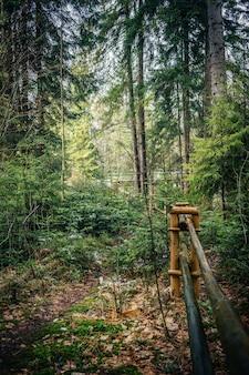 Colpo verticale di una staccionata in legno nella foresta