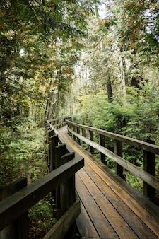 Vertical shot of a wooden pathway surrounded by greenery in a forest
