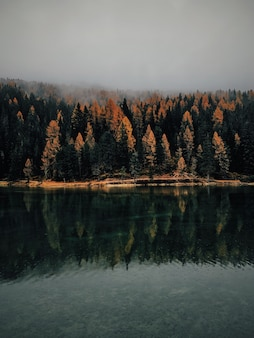 A vertical shot of yellow and green trees near the water