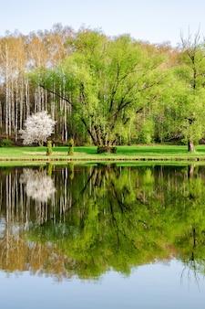 Brich 숲의 호수, 식물원 공원에서 반사와 수직 봄 풍경