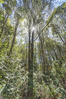 Vertical of the sun shining over a forest full of high rise trees