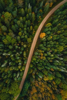 Vertical top view of a road through a dense forest on an autumn day