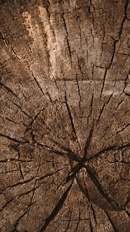 Vertical wood texture of cut tree trunk, tree-rings, close-up background texture