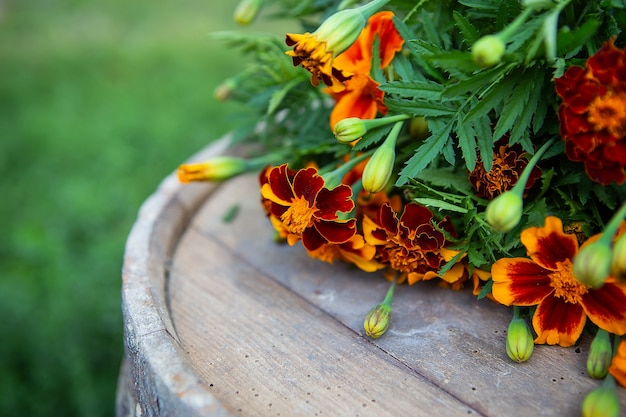Very beautiful colorful freshly cut marigolds lie on a wooden table.