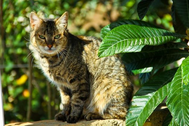 Очень красивый серый кот возле зеленого листа дерева