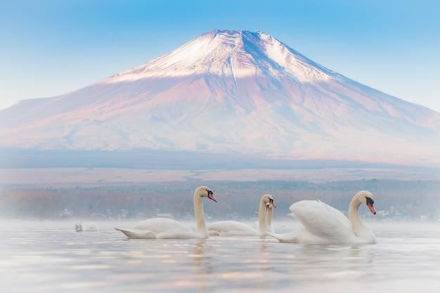 山岳湖でロマンチックで愛情のある、とても美しい白いカップルスワン。富士バックグルーン