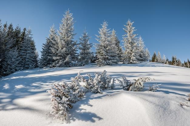 눈 덮인 숲과 매우 아름다운 겨울 풍경