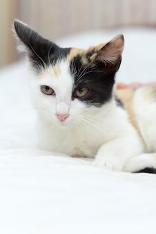 Очень милый пушистый трехцветный котенок удивлен в комнате