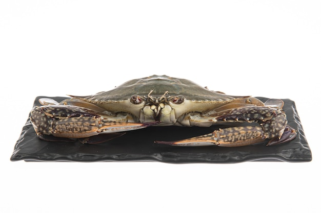 A very fresh biological crab is placed on a black plate