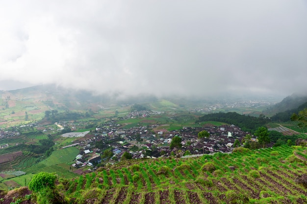 Very nice view of the rice fields on the island of java, dieng plateau, indonesia.