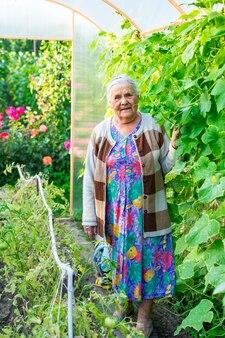 80 ~ 90 세의 아주 오래된 여성이 채소를 재배하면서 정원에있는 온실에 머물고 있습니다. 노년의 취미.