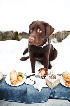 Очень грустный молодой лабрадор-ретривер перед вкусными сладкими десертами. праздничные угощения.