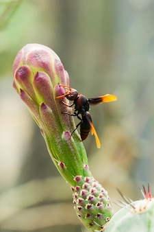 Vespula germanicaは花の上にあります。