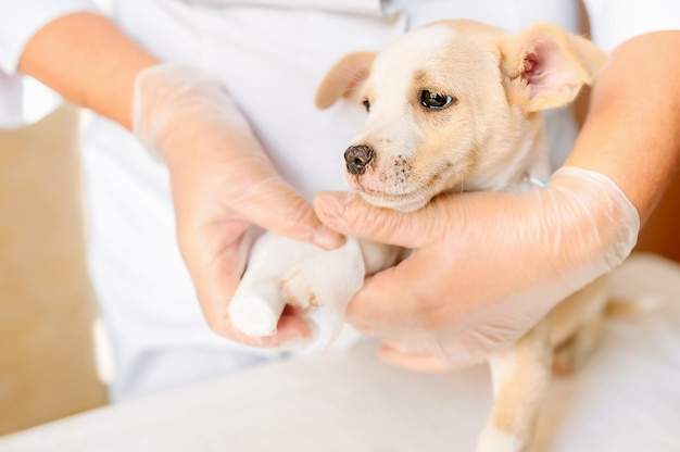 雑種犬の獣医包帯足
