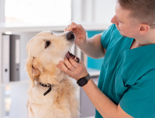 Vet checking teeth of dog