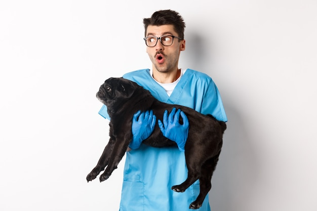 Vet clinic concept. amazed male doctor veterinarian holding cute black pug dog, smiling and staring left impressed, standing over white.