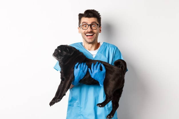 獣医クリニックのコンセプト。かわいい黒のパグ犬を保持し、カメラ、白い背景に笑みを浮かべて幸せな男性医師の獣医。
