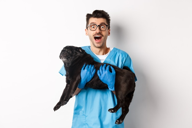 Vet clinic concept. happy male doctor veterinarian holding cute black pug dog, staring at camera amazed, white.