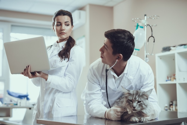 Vet doctor with stethoscope examining maine coon