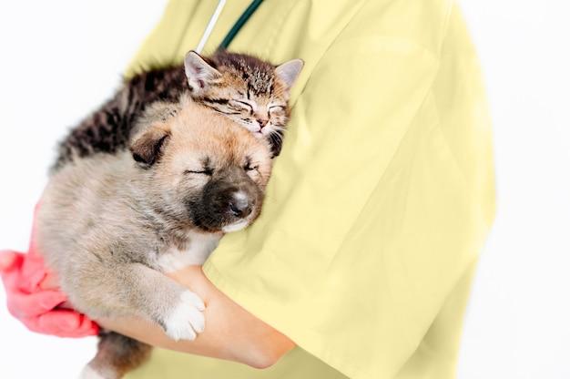 犬と猫を調べる獣医。獣医の子犬と子猫。動物病院。ペットの健康診断と予防接種。健康管理。