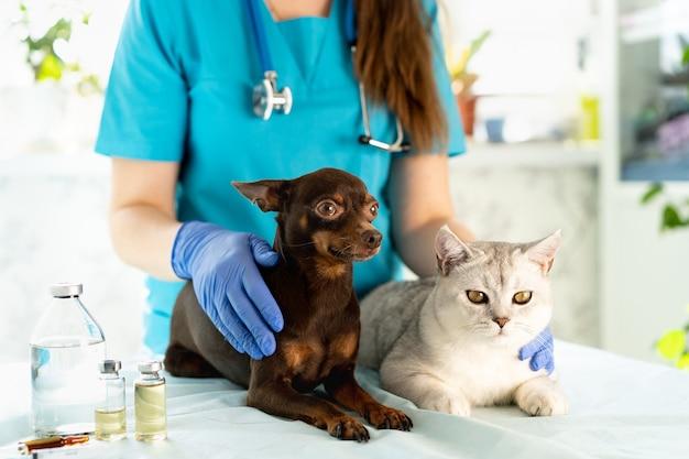 犬と猫を調べる獣医。獣医の子犬と子猫。ペットの検査と予防接種。