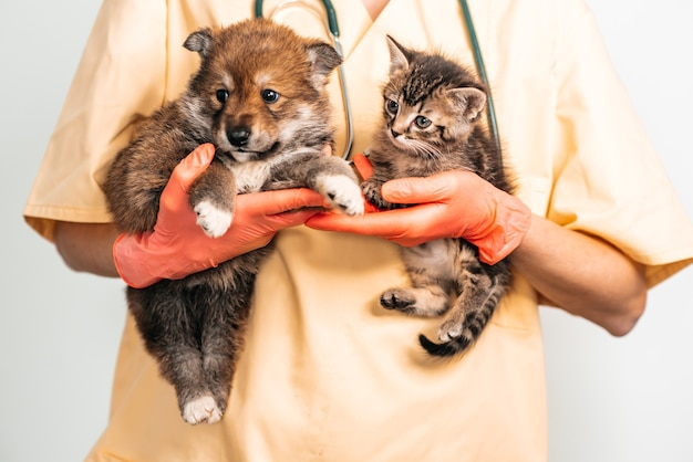 犬と猫を調べる獣医。獣医の子犬と子猫。ペットの予防接種。
