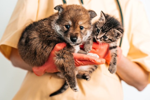 Vet examining dog and cat. puppy and kitten at veterinarian doctor. pet vaccination.