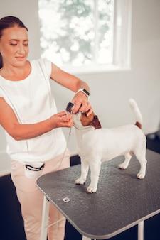 歯を調べる獣医。かわいい白い犬の歯を調べている間忙しい感じの美しいプロの獣医