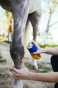 말의 다리를 치료하는 수의사.