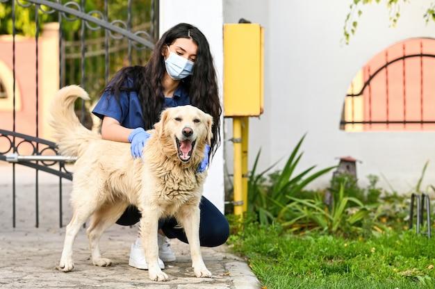 屋外でかわいいゴールデンレトリバー犬を慰める獣医
