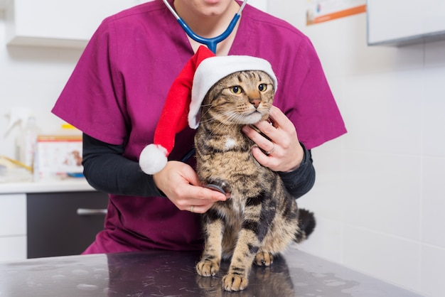 Veterinarian doctor examining a cute cat with santa claus hat