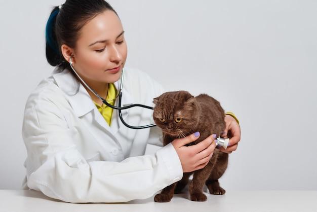 獣医クリニックで猫を診察する聴診器を持った獣医。