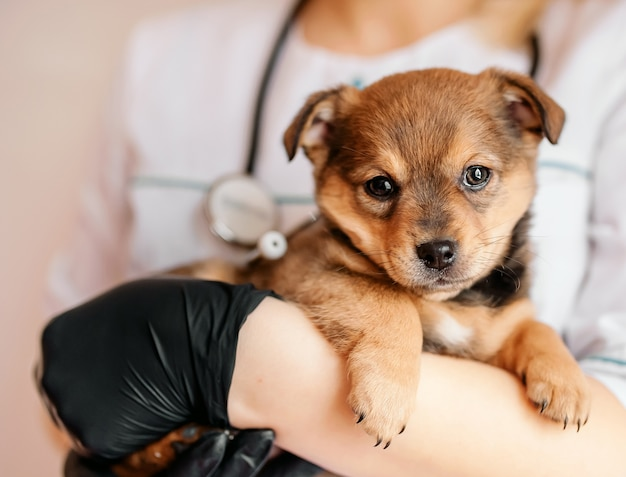 Ветеринар осматривает щенка в больнице