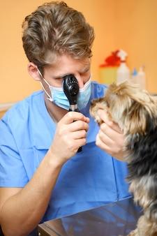 검안경을 통해 강아지의 눈을 검사하는 수의사.