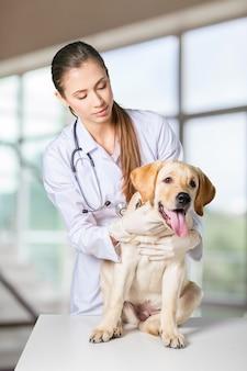 병원에서 개에게 주사를 주는 수의사