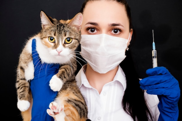Veterinarian holds a cat in his hands. vaccination of cats. treatment for cats. consultation with a physician.