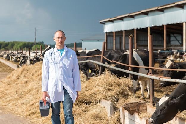 牛農場の白いローブを着た獣医