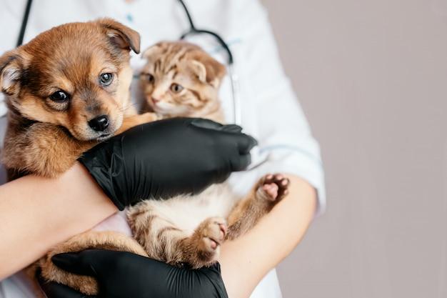 Ветеринар в черных перчатках с собакой и кошкой в руках