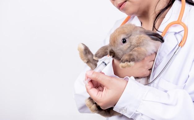 獣医師が小さな茶色のウサギに餌をやる