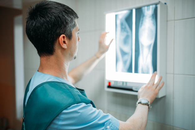 Veterinarian looks at the x-ray of the dog, veterinary clinic. vet doctor, treatment a sick dog