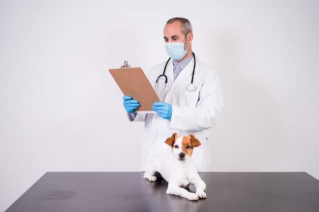 Veterinarian man working on clinic with cute small jack russell dog.