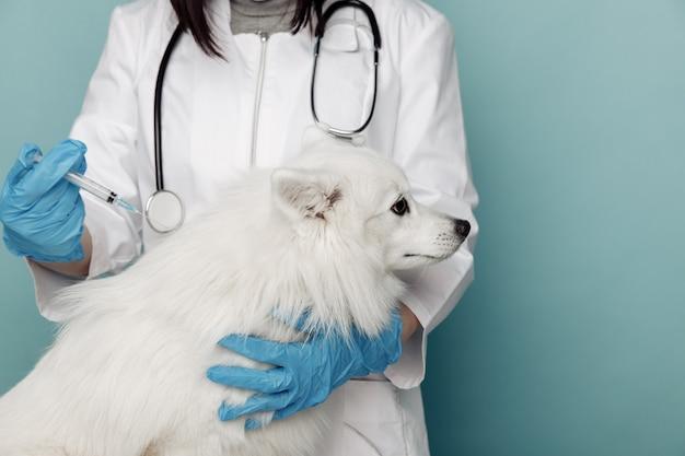 獣医クリニックのテーブルに注射器と白い犬を持つ獣医
