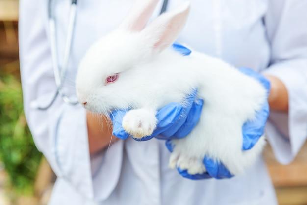 청진기를 들고 목장에서 토끼를 검사하는 수의사 여자