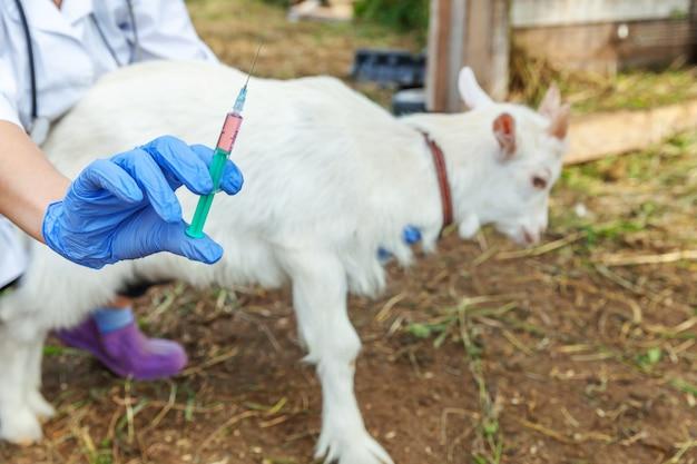 주사기를 들고 목장에 염소 아이를 주입하는 수의사 여자