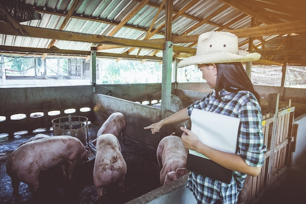 Veterinarian working on check and manage at agriculture farm