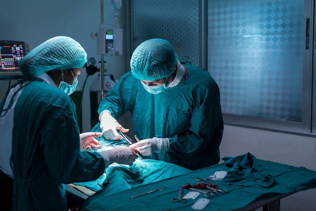 Veterinary or doctor have to surgery sterilization on pet in operating room