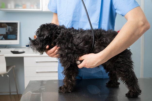 수의사, 개를 검사하고, 클리닉에서 청진기로
