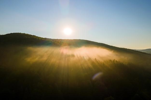 明るい夏の日の出の暗い森の木々の上の鮮やかな霧の朝。夜明けの野生の森の素晴らしい景色。