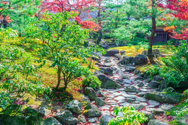 活気のある森風景の秋の美しさ
