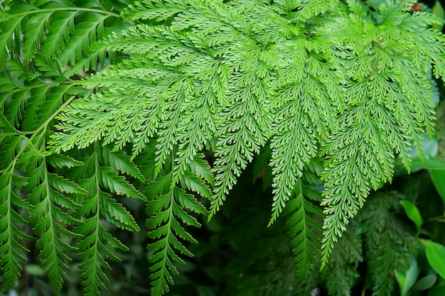 Vibrant green different type of gorgeous fern plants leaves in the garden